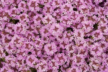Background of little pink flowers stock photo picture and royalty background of little pink flowers stock photo 6319125 mightylinksfo