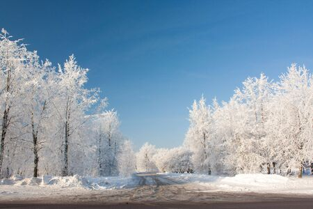 Snowy winter with trees and road