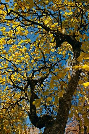 Autumn trees on sky background Stock Photo - 8391690