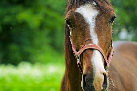 Horse portrait in the green nature