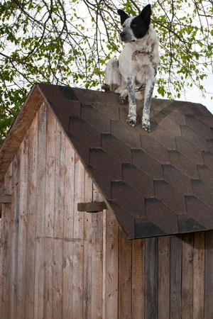 uneducated: Dog sitting on te roof of doghouse Stock Photo