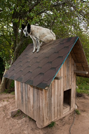Dog sitting on te roof of doghouse Imagens