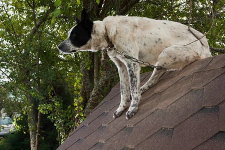 Dog sitting on te roof of doghouse Stock Photo - 13214147