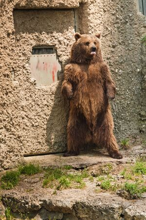 Bear portrait Stock Photo - 13214300