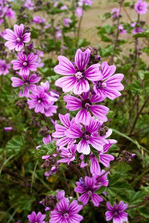 champ de fleurs: Macro de fleurs des champs de pr�s dans la nature
