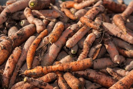 Carrots vegetables raw food in nature Stock Photo
