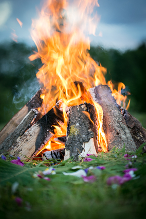 Bonfire in a wood with fern and flowers