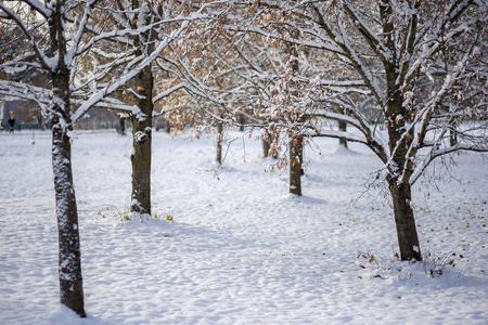 Snowy winter in the park Standard-Bild