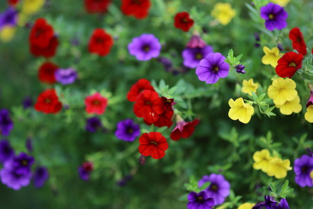 Flowers with shallow Depth Of Field in summer