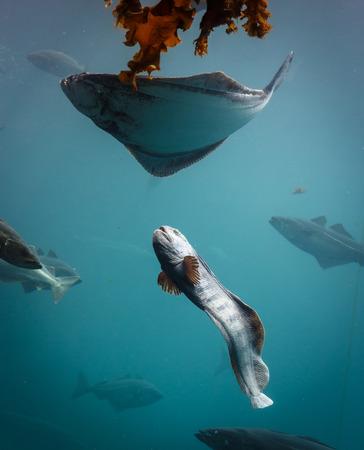 Seeaquarium in Alesund Norwegen mit vielen Fischen Standard-Bild - 91508056