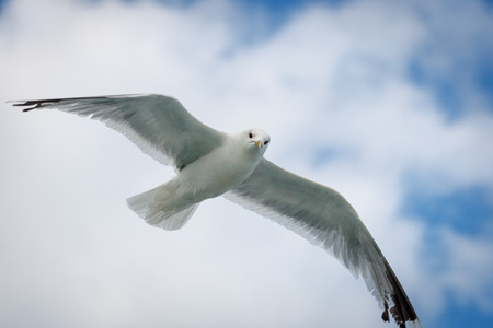 Seagull flying in the sky close up Stock Photo