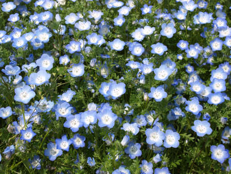 childen: Flower in Japan