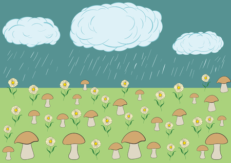 natural phenomenon: The landscape a rain waters a glade with mushrooms and camomiles