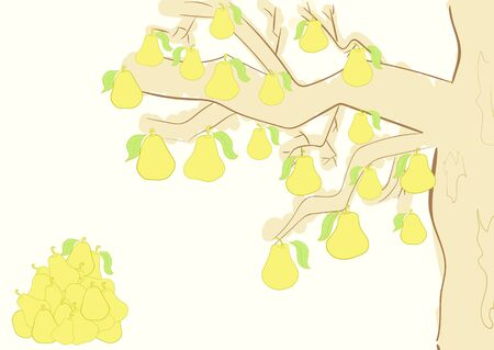 pear tree: A half of a pear tree with ripe yellow pears