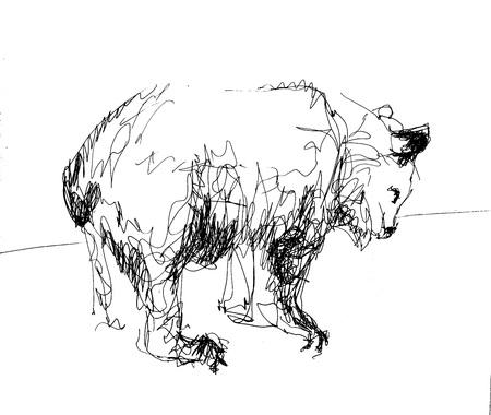 Bear-sketch