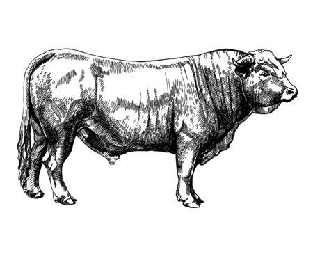 farm animals Obrak bull maker graphics illustration Stock Photo