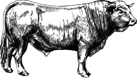 wektor zwierzęta gospodarskie Obrak bull maker ilustracja graficzna