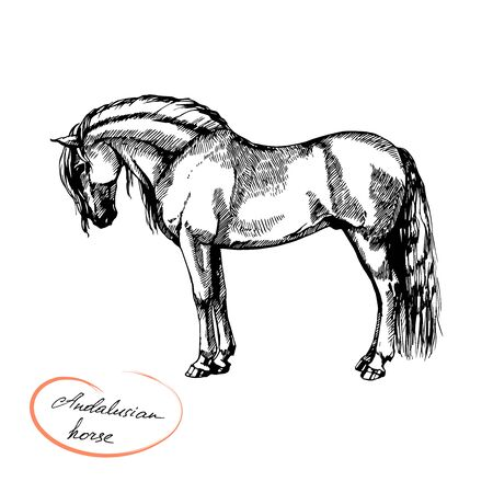 farm riding and trotting andalusian horse