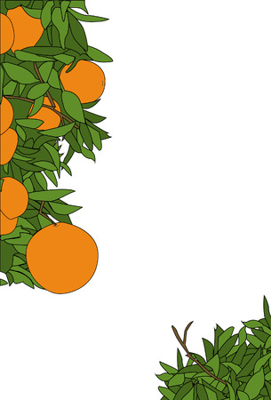 design elements: An orange plant page border design