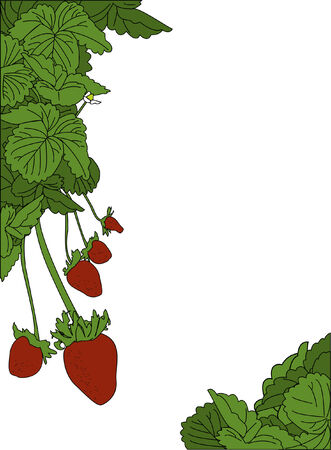 strawberry: A strawberry plant page border design Illustration
