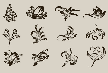 Hand drawn detailed floral ornament collection