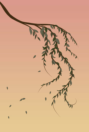 Weeping Willow tree branch background Stock Vector - 6759827