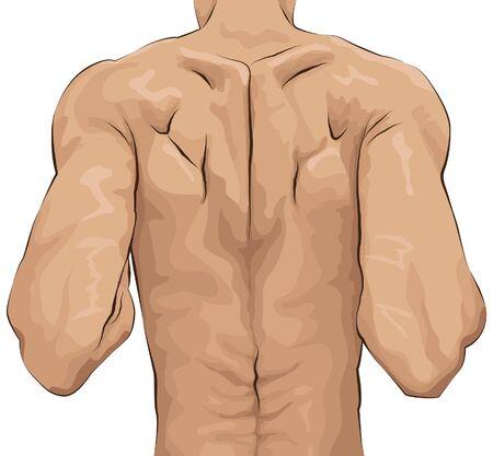 sketchy illustration of muscular mans back Vettoriali