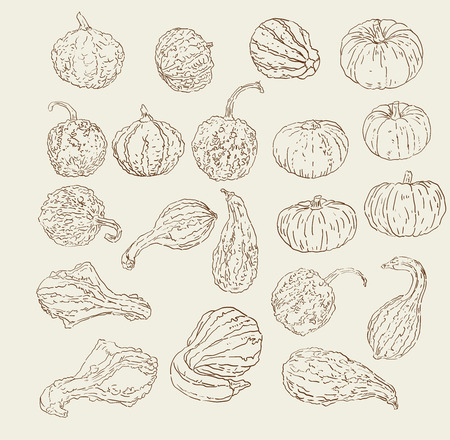hand set: Vector collection of hand drawn fall  winter gourds and squash sketches