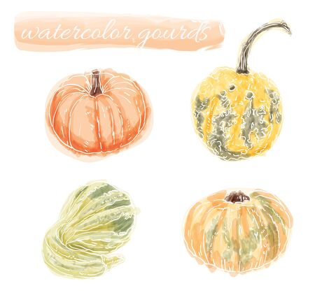 gourds: Vector collection of hand drawn water color gourds and pumpkin
