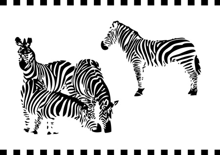 walking zebras Stock Vector - 15280355