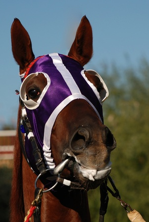 Close up of a horse head with colorful blinders