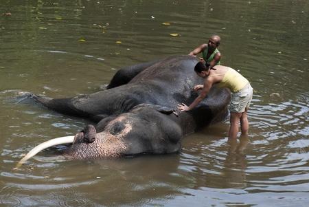 Kegalle, Sri Lanka-6 M�rz 2012: Ein Freiwilliger w�scht einen Elefanten mit Elefanten Mahout bei Millennium Elephant Foundation. Editorial