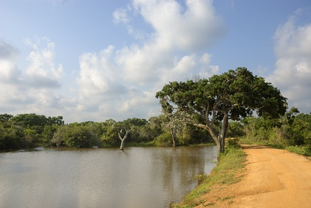 A wildlife panorama from Yala National Park, Sri Lanka.