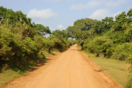 A road used during safari in Yala National Park, Sri Lanka.