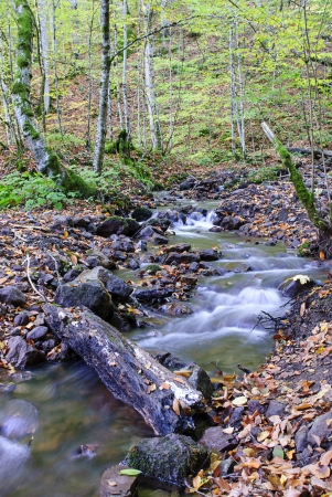 Stream at Yedigoller (Seven Lakes) National Park in Bolu, Turkey. Stock Photo