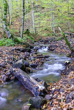 bourn: Stream at Yedigoller (Seven Lakes) National Park in Bolu, Turkey. Stock Photo