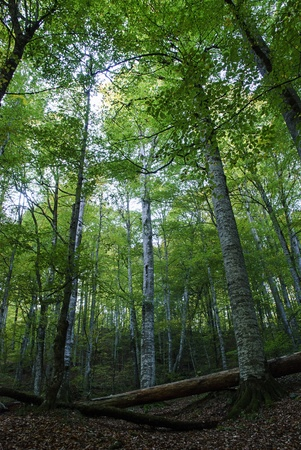 Forest view from Yedigoller (Seven Lakes) National Park in Bolu, Turkey.