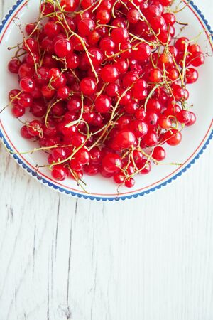 harvest of red currant berries