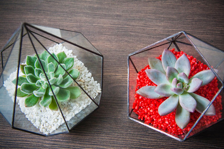 glass florarium for plant, beautiful geometric vase for interior