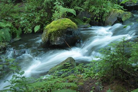 An ice cold babbling brook among fern in the forest Stock Photo