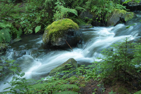 A water-course with long exposure in a rich planted environment
