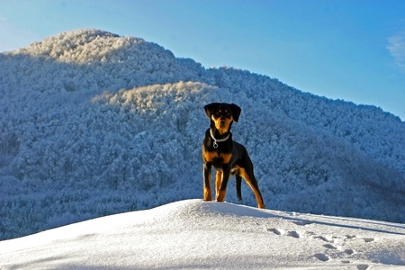 Dog on hill in winter 스톡 콘텐츠