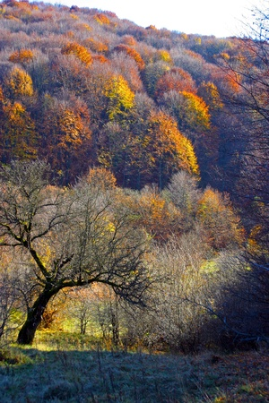 Autumn mountain forest Stock Photo - 10802288