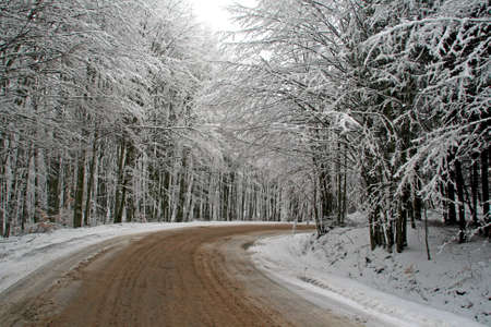 mud and snow: Cloudy day on the forest road