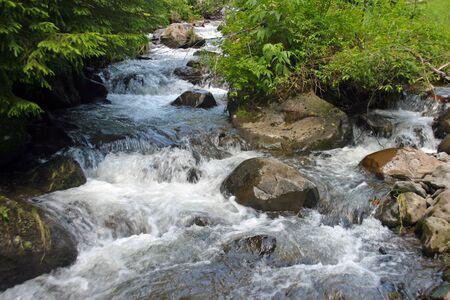 A mountain creek running swiftly among the rocks. Stock Photo