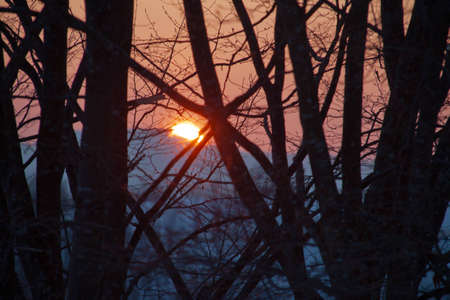 Winter sunset shining through the branches of the trees