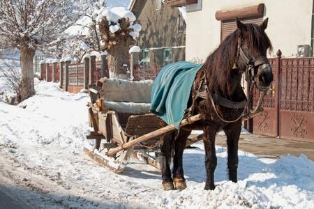 horse sleigh: A horse-drawn wooden sleigh in the street
