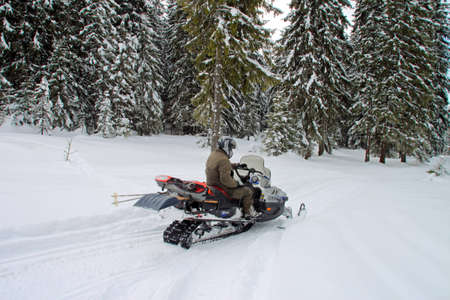 Man on a snowmobile among huge pine trees