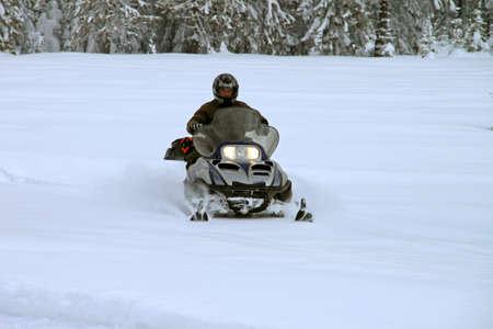 Man on a snowmobile among huge pine trees 免版税图像 - 12734633