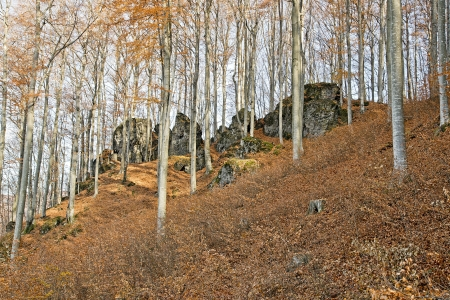 Beech forest in autumn with big rocks Stock Photo - 16944899